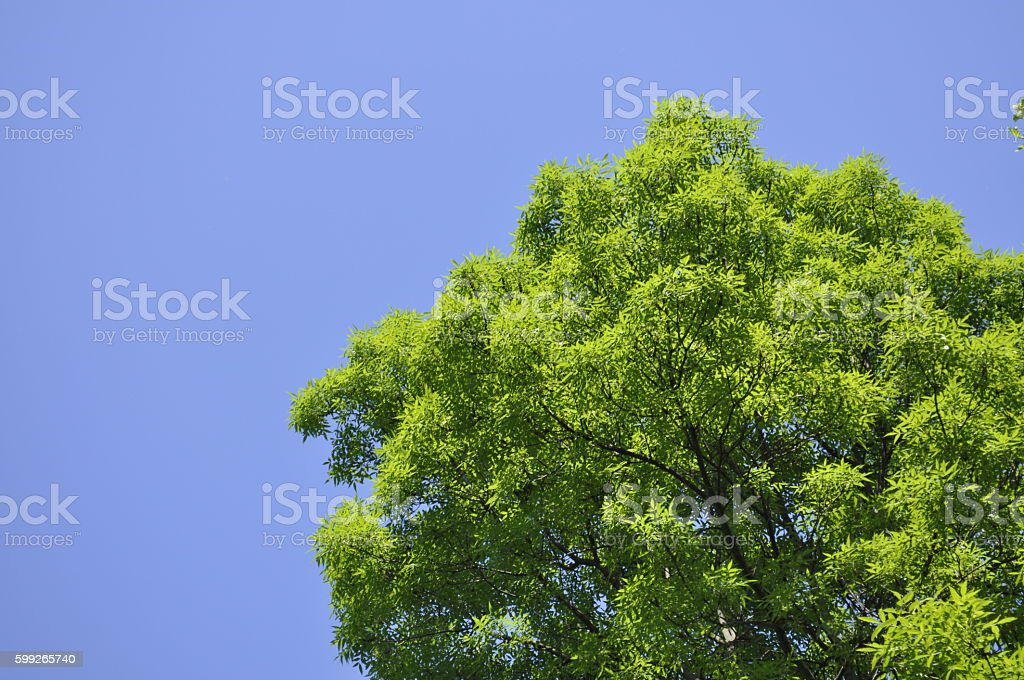 green foliage tree during spring royalty-free stock photo