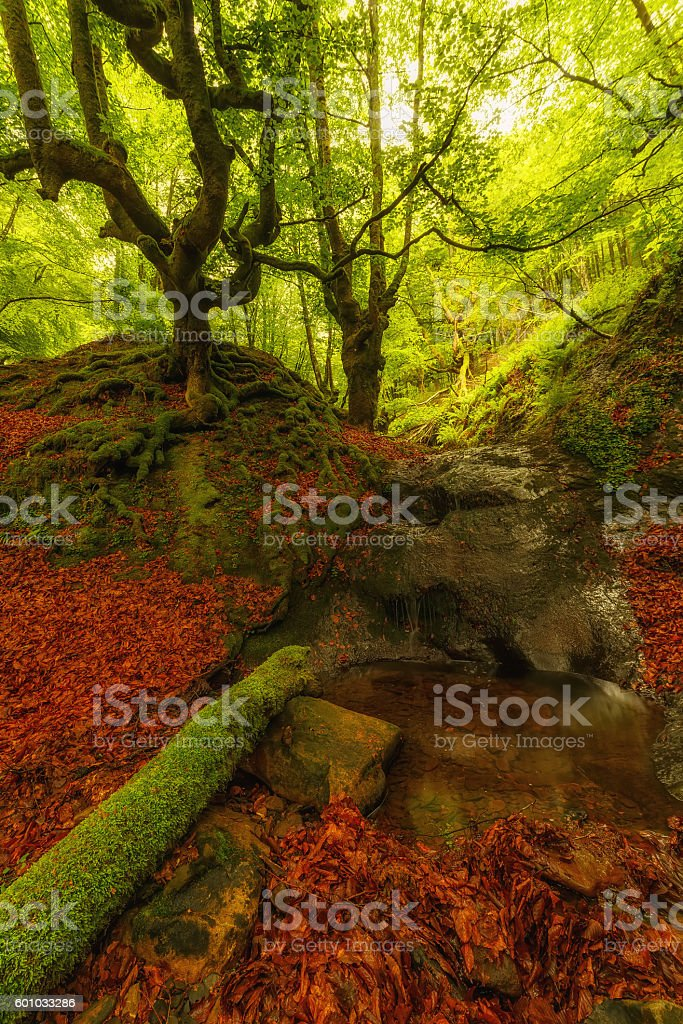 Green forest and a red carpet stock photo