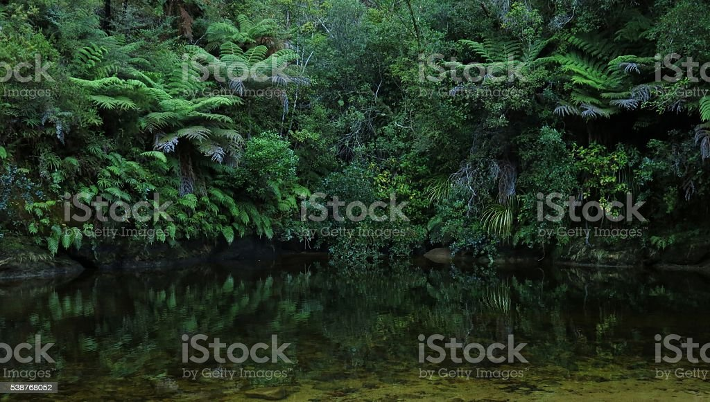 Green forest and creek in New Zealand stock photo