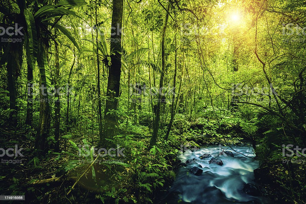Green Forest and River at Sunrise stock photo