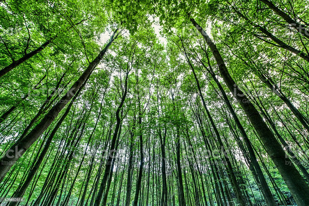 Green forest as seen with a low perspective stock photo
