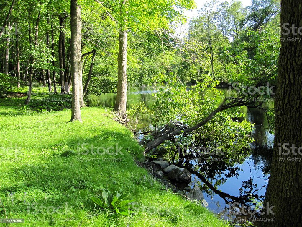 Green Forest by the River stock photo