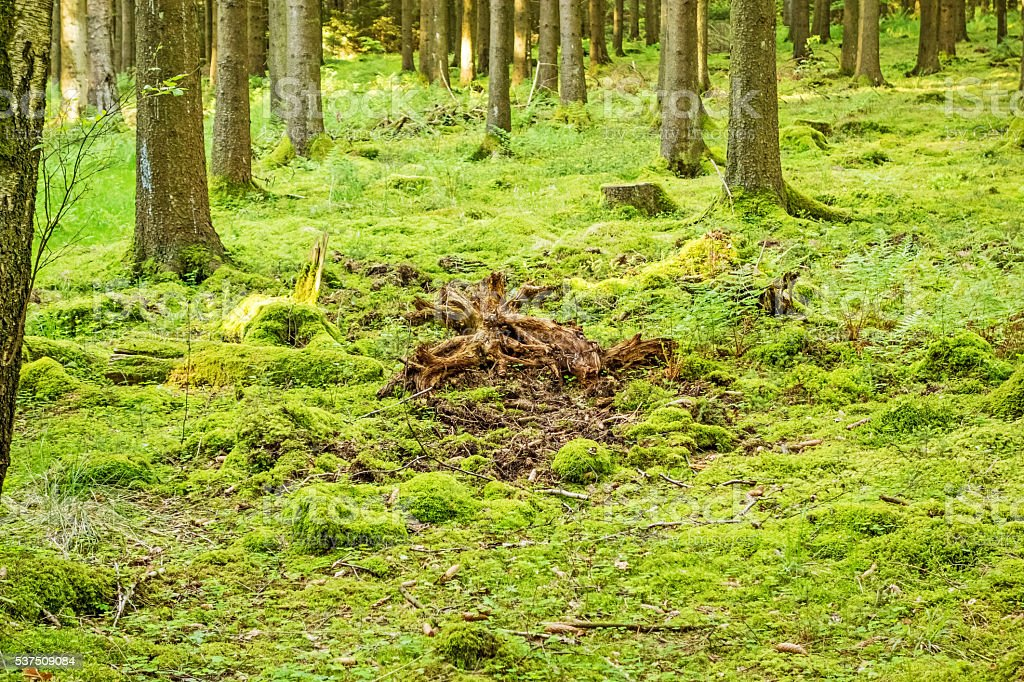 Green forest floor stock photo