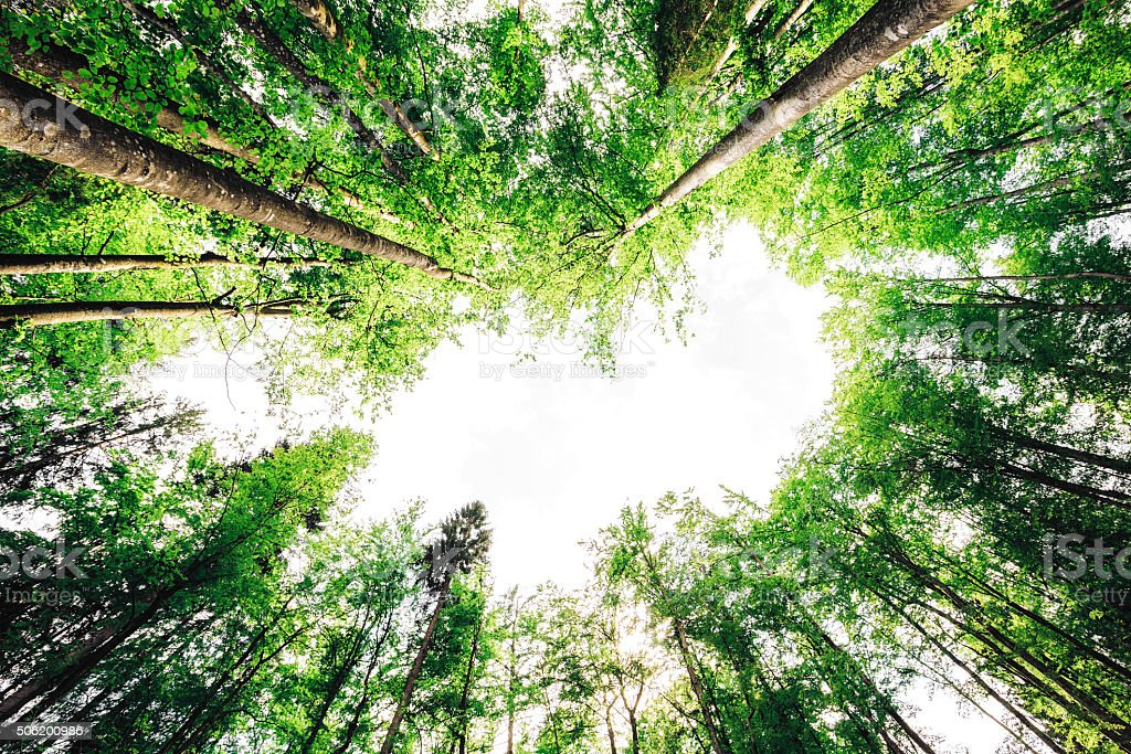 Green Forest From Bellow stock photo