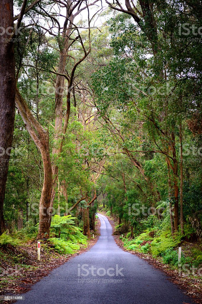Green forest in Australia stock photo