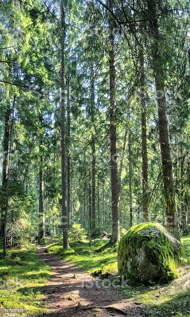 Green forest landscape with sunbeams royalty-free stock photo
