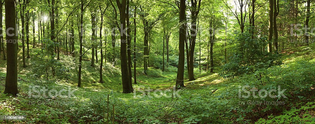 Green forest panorama royalty-free stock photo