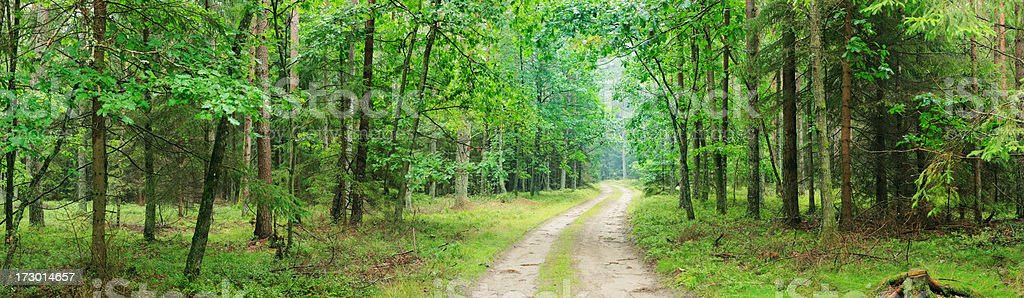 Green forest - panorama royalty-free stock photo