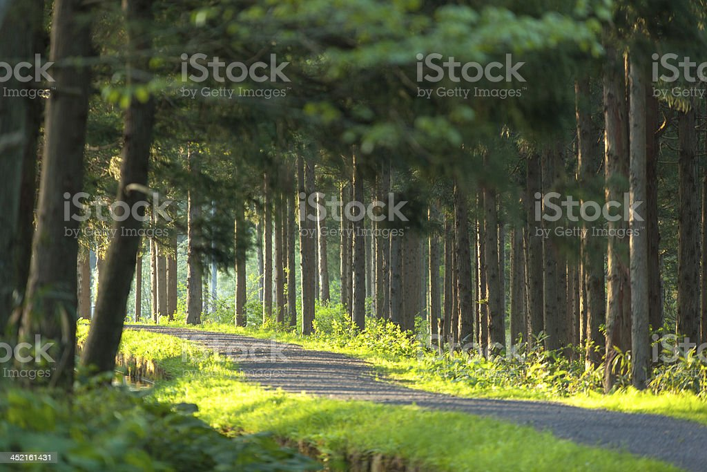 Green forest path stock photo