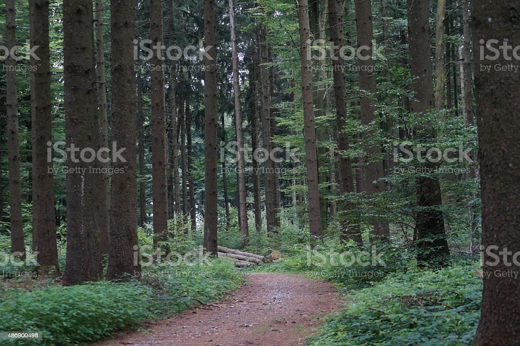 Green Forest pathway stock photo