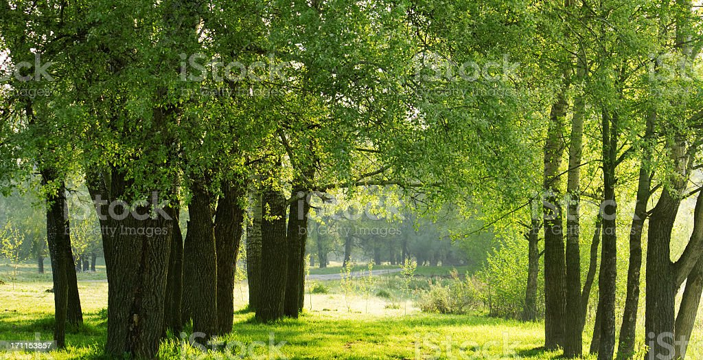 Green forest. royalty-free stock photo