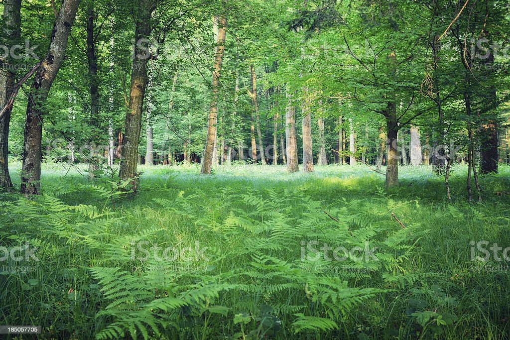 Green Forest royalty-free stock photo