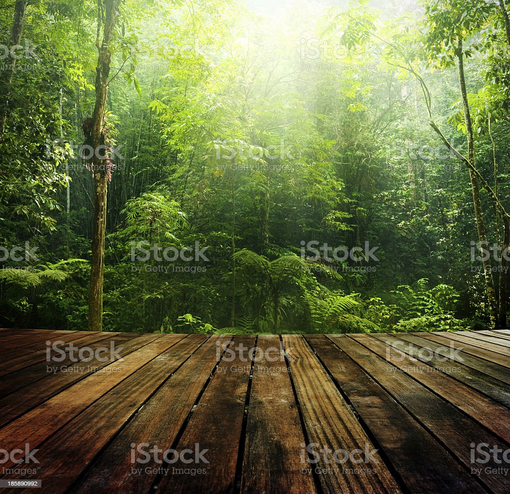 Green forest. stock photo
