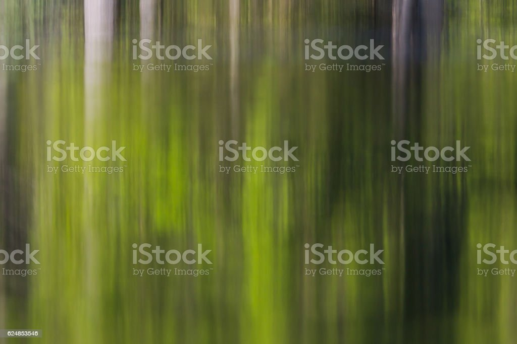 Green forest reflected on water surface stock photo