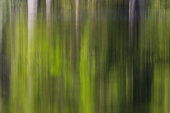 Green forest reflected on water surface