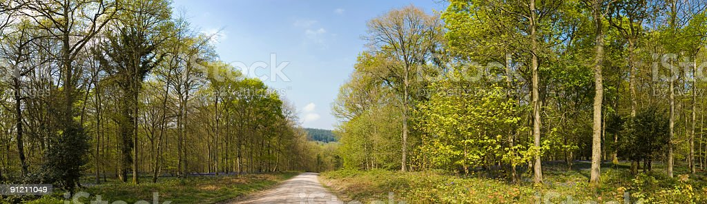 Green forest trail royalty-free stock photo