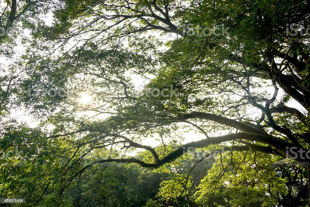 green forest trees backgrounds stock photo