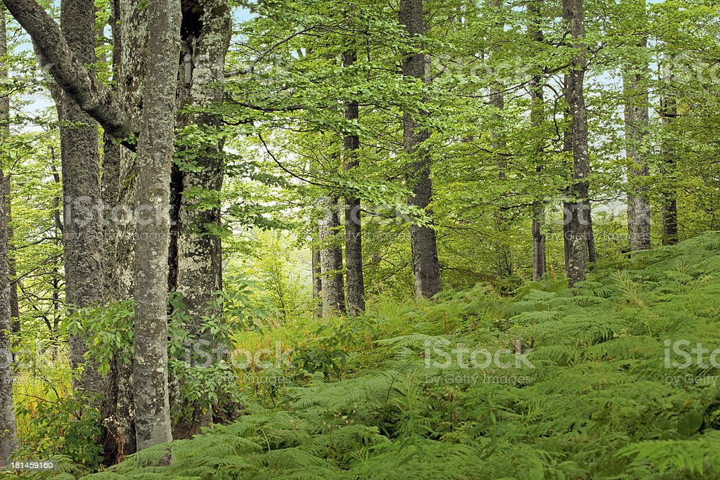 green forest with fern royalty-free stock photo