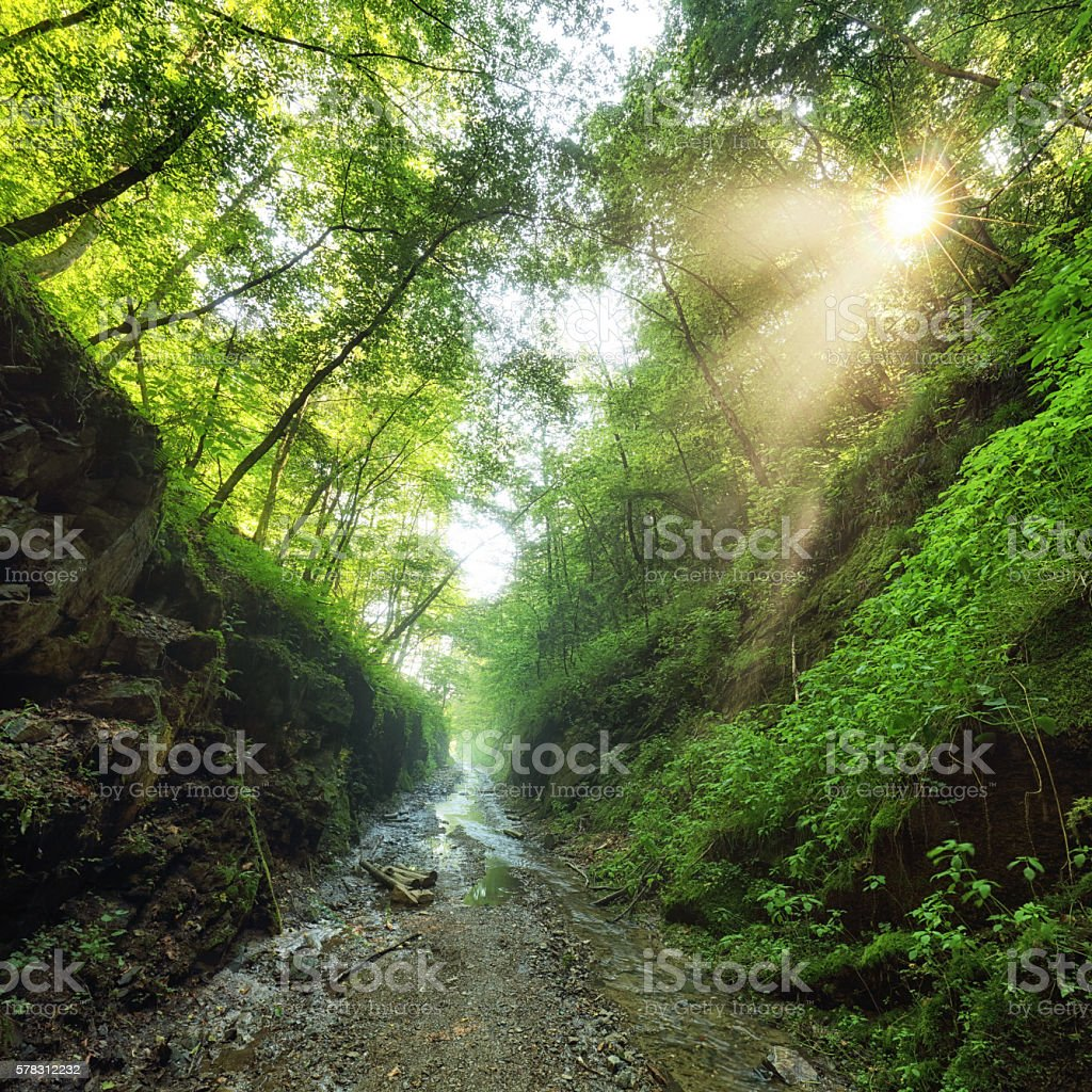 Green forest with path and sun stock photo