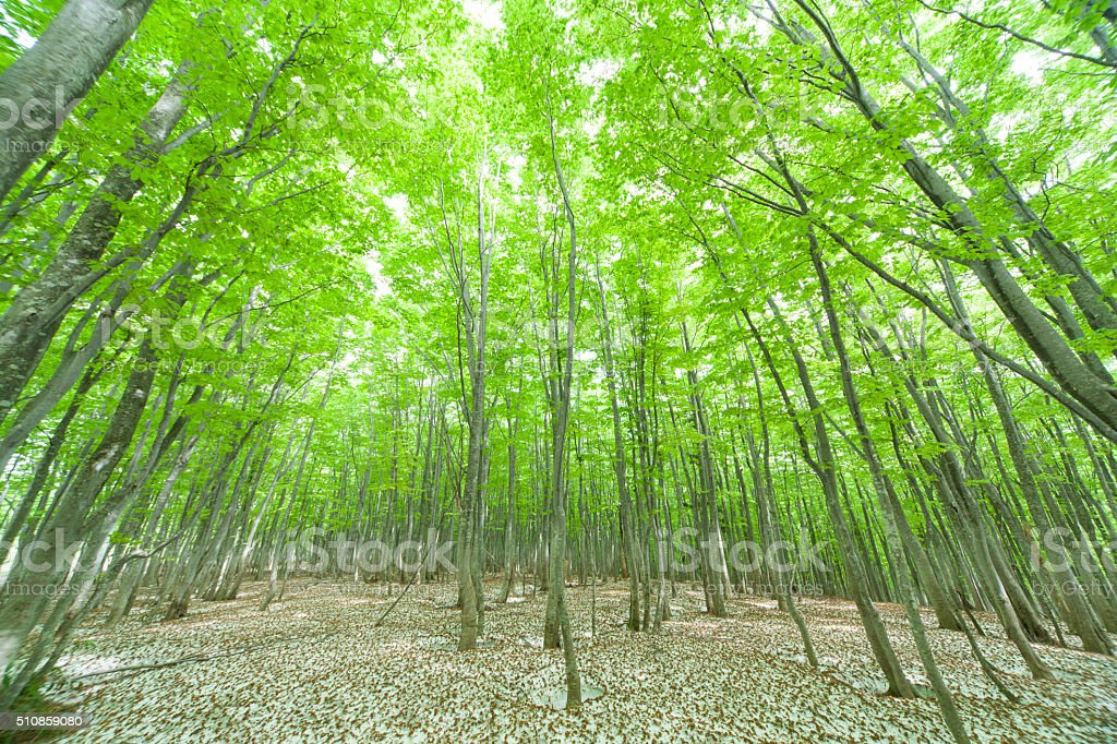 Green forest with snowpack stock photo