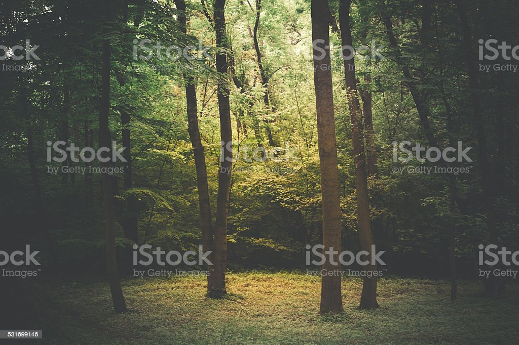 Green forest with sun rays stock photo