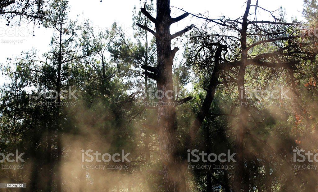 Green forest with sun shine and lens flares stock photo