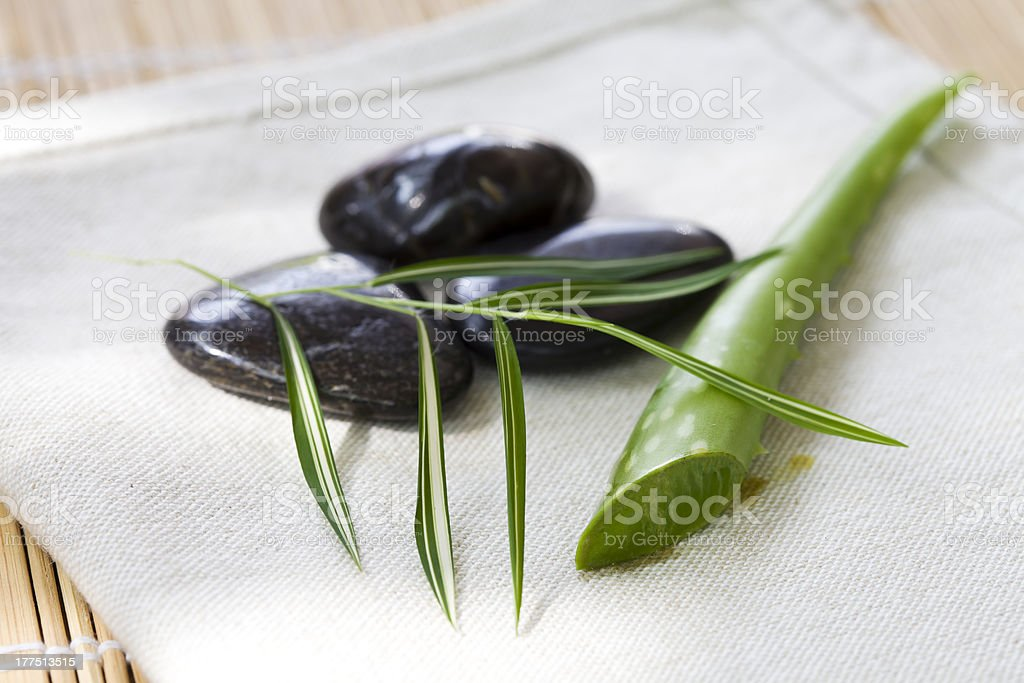 Green fresh aloe stock photo