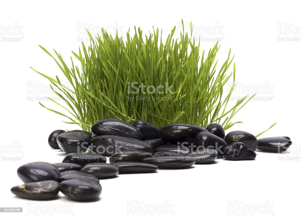green fresh grass and black stones royalty-free stock photo