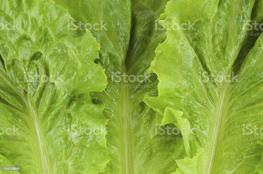 Green fresh lettuce stock photo