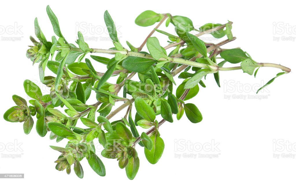 Green fresh thyme. stock photo