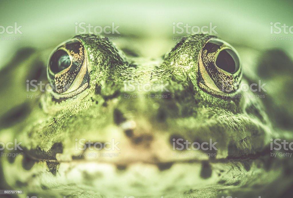 Green frog close up stock photo