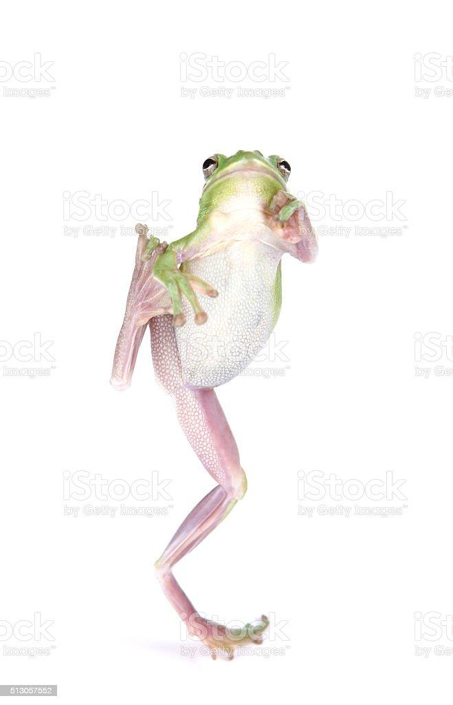 Green Frog Jumping stock photo