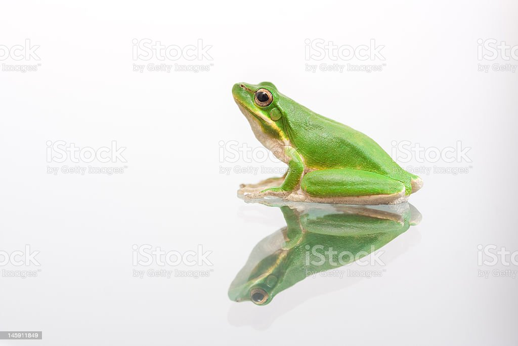 Green frog on glass stock photo