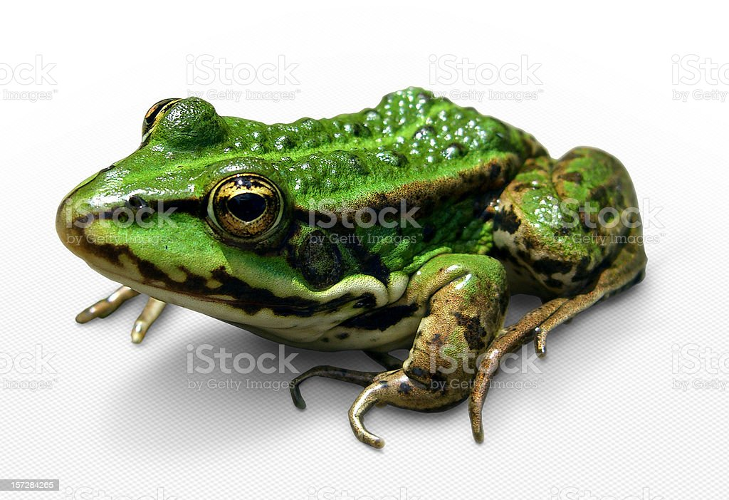 Green frog (with clipping path) stock photo