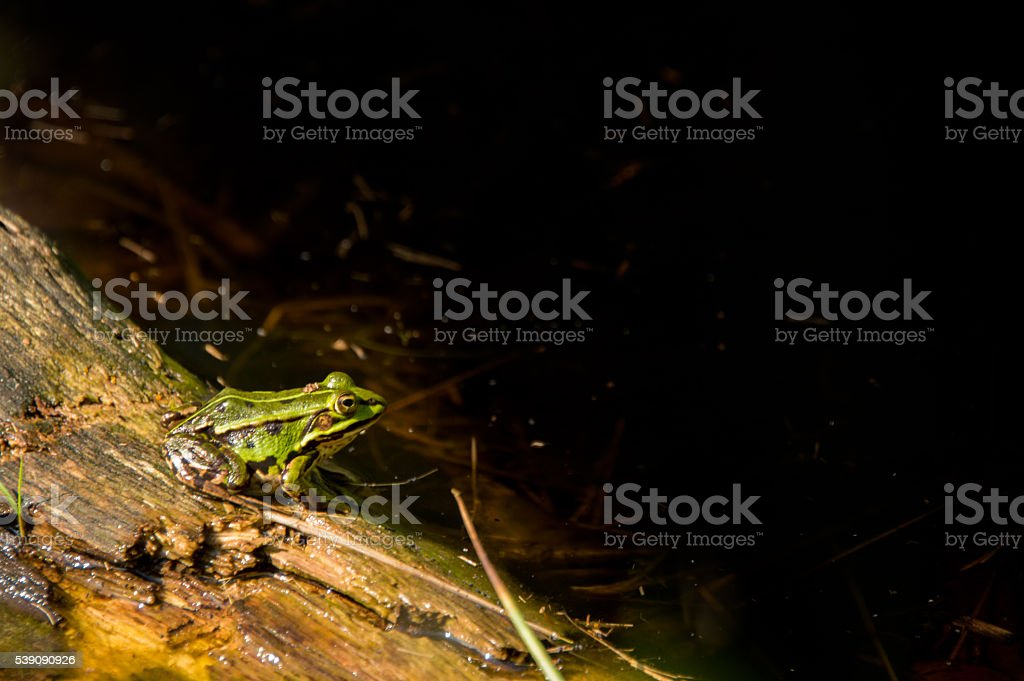 Green frog sitting on a tree trunk stock photo