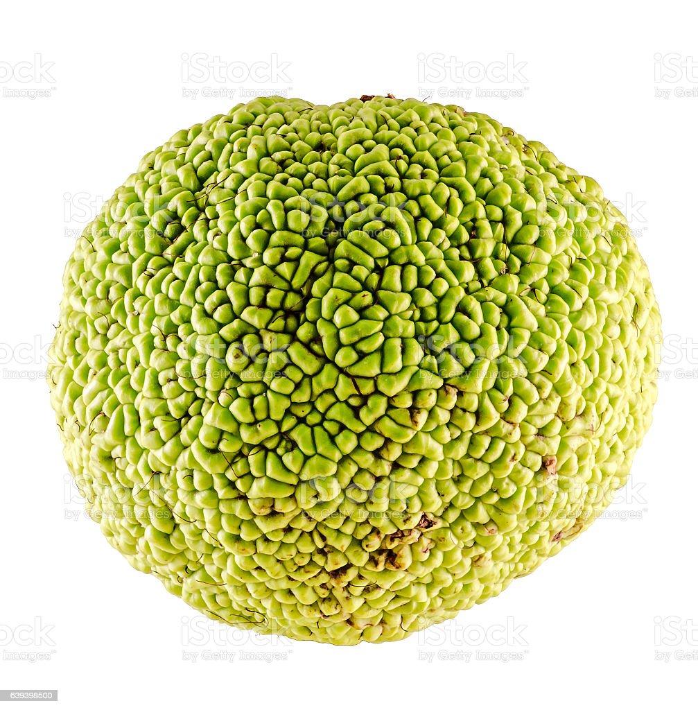 Green fruit of Maclura pomifera, also known as Osage orange stock photo