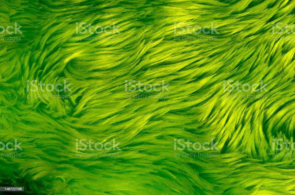 Green Fur stock photo