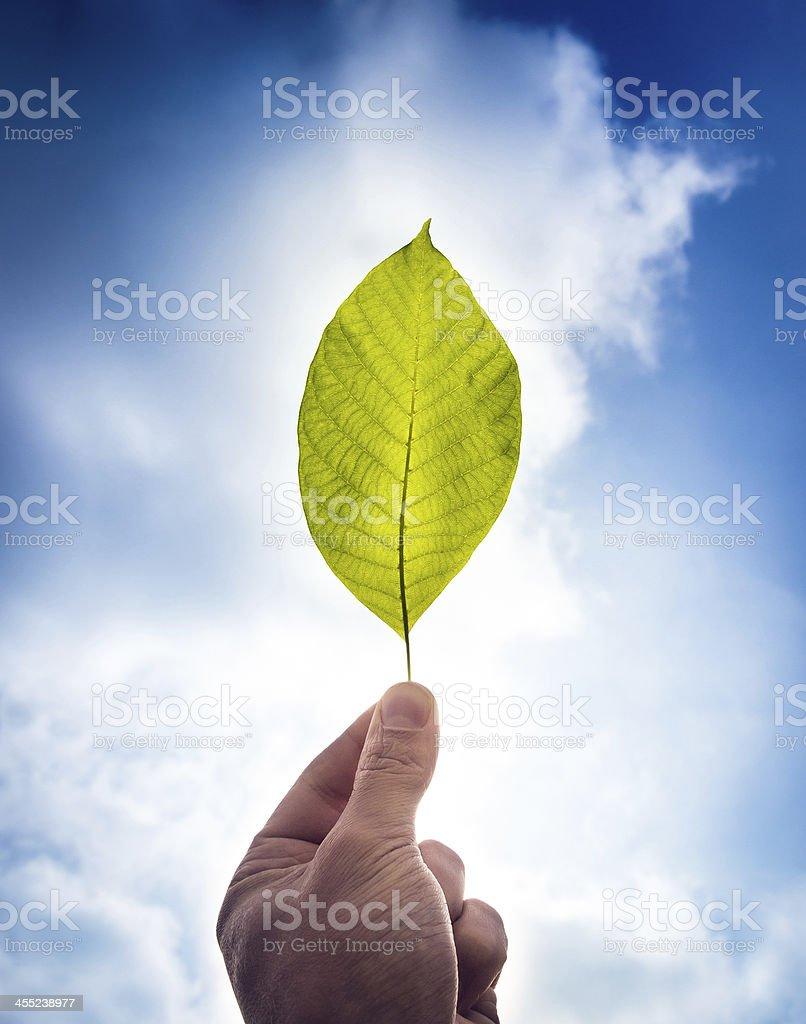 Green future stock photo