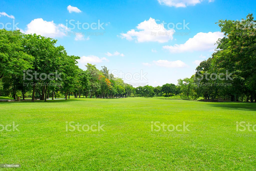 Green garden and tree with blue sky stock photo