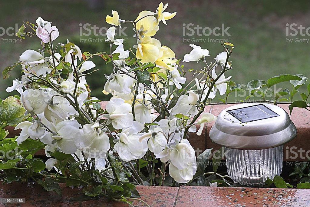 Green garden royalty-free stock photo