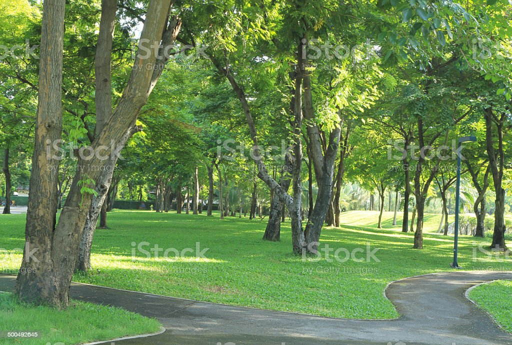 Green garden with footpath stock photo