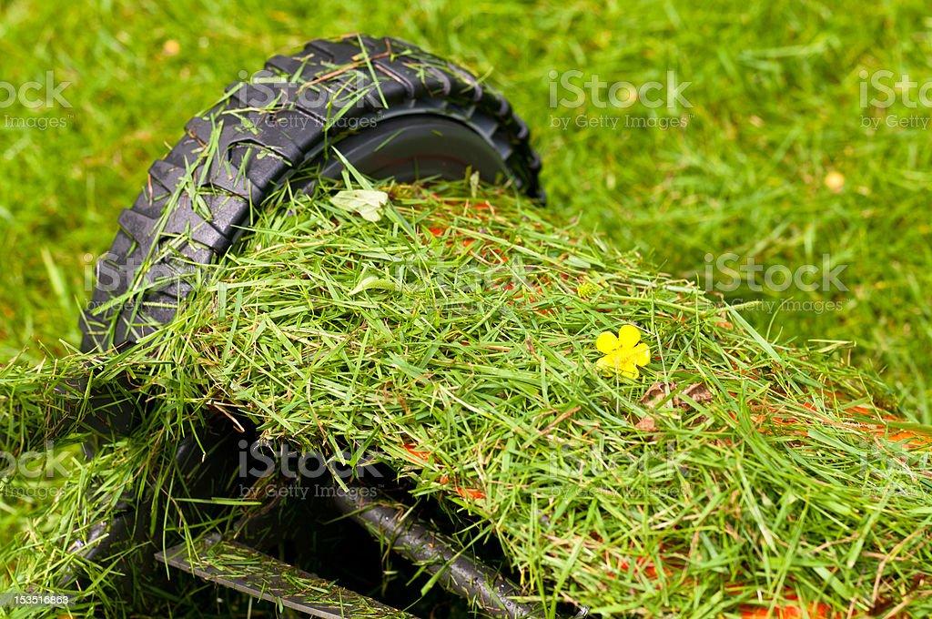 Green gardening stock photo