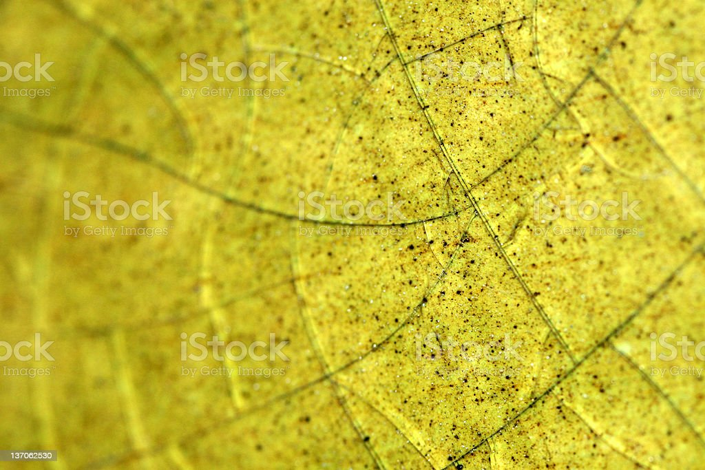 Green glass background royalty-free stock photo
