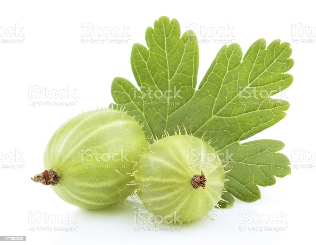 Green gooseberry fruit with leaf on white royalty-free stock photo