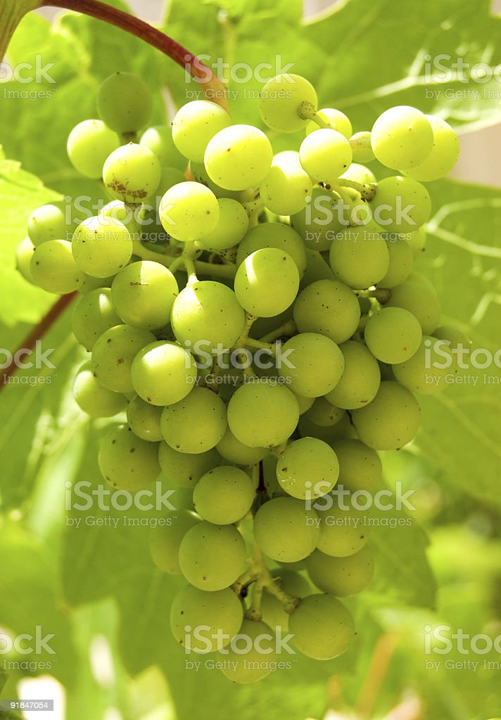 green grape royalty-free stock photo