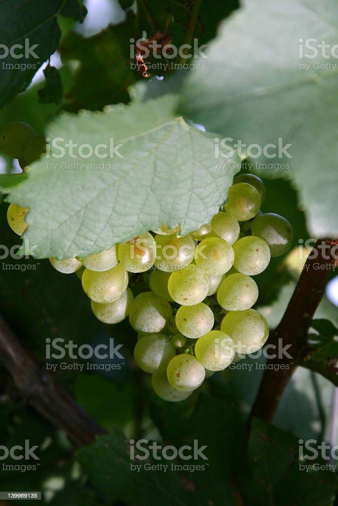 Green grapes royalty-free stock photo