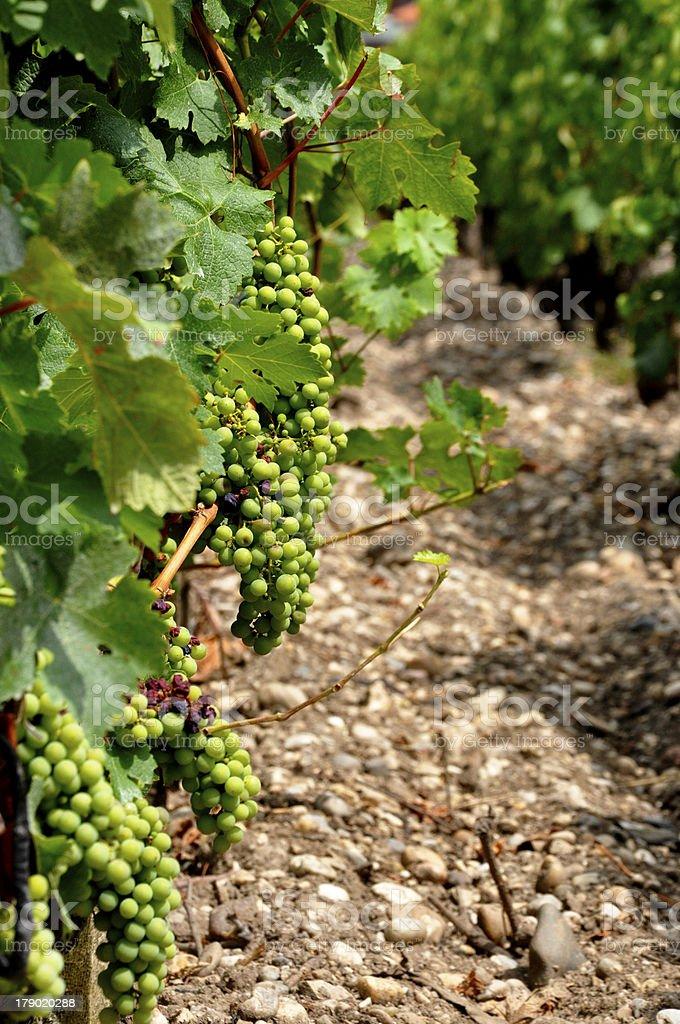 緑のブドウ ロイヤリティフリーストックフォト