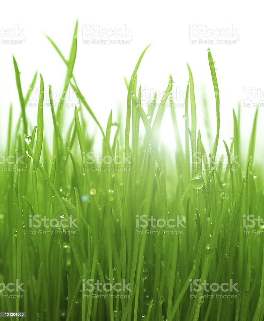 green gras after a morning rain royalty-free stock photo