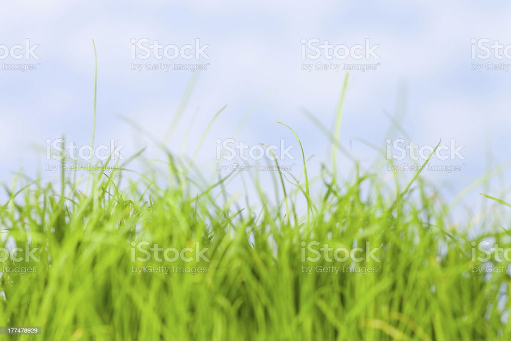 green gras against sky royalty-free stock photo