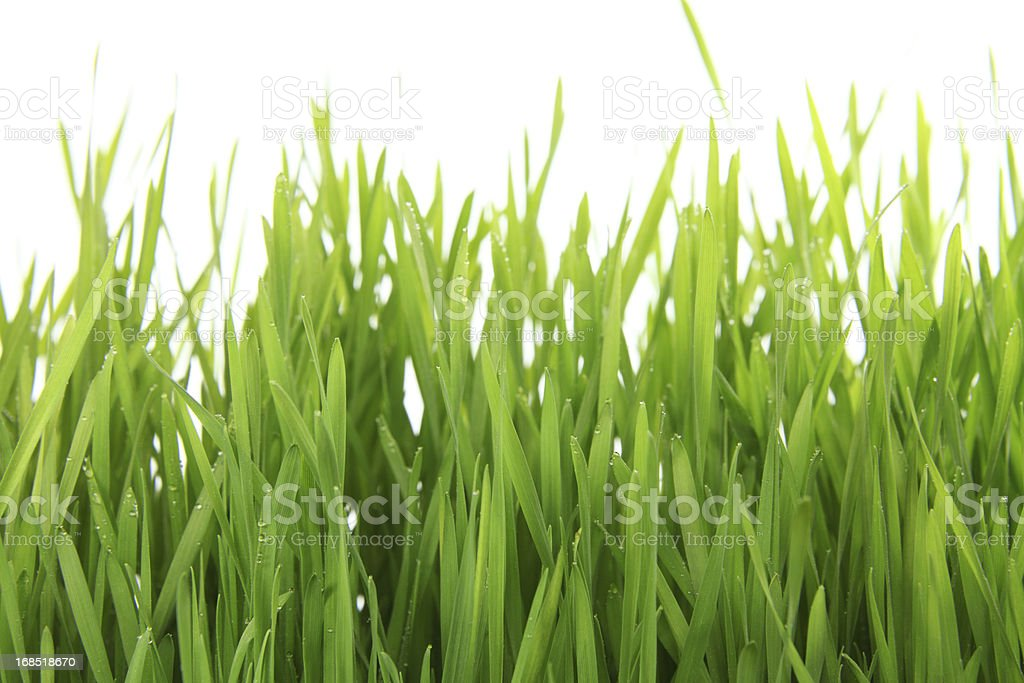 green gras on white stock photo